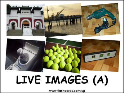 250 Real Live Images Flash Cards