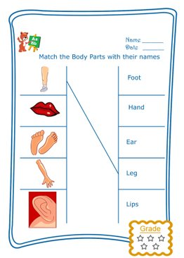 Match the Word - Body Parts