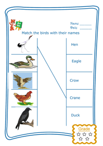Match the Word - Birds