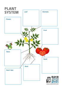Lower Primary Science Worksheets (Subscription)